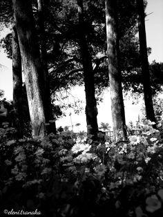 Ελένη Τράνακα: Λόφος Στράνη, Ζάκυνθος / Lofos Strani, Zakynthos