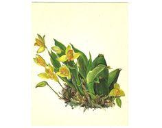Floral print Botanical Illustration 1960s by BotanicalVintageArt