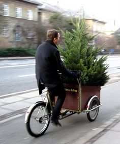 Man delivering a pine tree in a large wicker bike basket. There's also a British TV series on Netflix called Delivery Man. Really funny. You'd like it!
