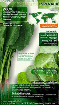 ¿Qué sabes de la espinaca? #infografia #espinaca