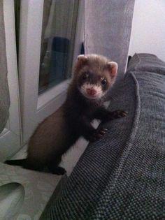 Meet my cute Bandit ! http://ift.tt/2ofRT2y