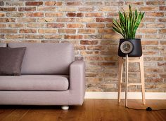clairy launches kickstarter campaign to fund natural air purifier