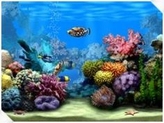 If you are planning to have an aquarium at home and still in confusion what size you should have? We will guide you through it; let's discuss...