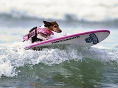 Teach your dog to Surf!