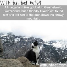 Lost hiker gets help from a cat - WTF fun facts