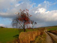 Nostalgię jesieni spotkasz na leśnej lub polnej drodze