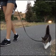 "Animated KITTEN GIF • Rosie first walk in the street. She is a funny, cool and cute Kitten ""Throwback to Rosie's first walk! I fully intended to carry her, but she jumped out of my arms and toddled her way into our hearts...""gain, hehe."
