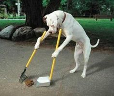 This graduate of the of Canine Technical Institute (CTI) has a BS degree in Waste Management and is demonstrating his knowledge and fine skills.