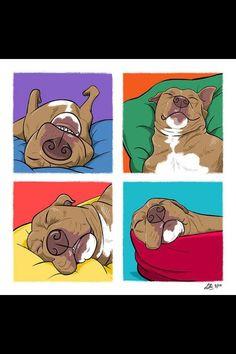 pitbulls...this is exactly what my boy, Kazi, looks like sleeping
