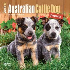 Australian Cattle Dog Puppies - 2014 Mini Calendar Calendars at ...