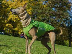 Greyhound / Whippet Extra Warm Winter Dog Coat with underbelly protection - Waterproof / Fleece Coat + turtleneck / snood - MADE TO ORDER Dog Snood, Dog Winter Coat, Dog Jacket, Dog Wear, Mixed Breed, Dog Coats, Whippet, Dog Breeds, Pup