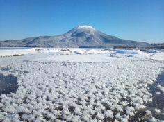厳寒の阿寒湖に咲く「フロストフラワー」。湖面に張ったばかりの透明な氷の上に、氷から昇華した水蒸気が付いてできる氷の結晶です。-15℃以下、無風の早朝など条件が整ったときのみ見られる、冬の北海道ならではの美しい景観です。