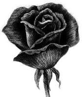 Resultado de imagen de dibujos de rosas