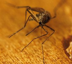 Veterinarian tips for protecting pets and family from west nile virus!