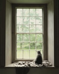 Cat sitting at window