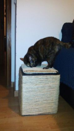 Mesa em cordel para gato