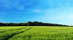 пейзажи, фото, природа, поле, поля, дерево, лес, деревья, весна, весенние обои, лето, летние картинки