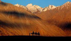 Camel Safari in Hunder, Nubra valley of Ladakh. Pic by Abhinav Garg #Leh #Ladakh #Nubra #safari #himalayas #camel #explore #travel  To know more, write to us at- info@himalayantravelstudio.com or visit www.himalayantravelstudio.com
