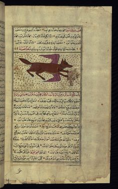 Title: A two-winged fox Form: Illustration Label: This illustration depicts a two-winged fox (thaʿlab dhū al-janāḥayn).