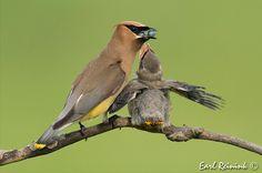 Beautiful birds! (I wish I knew what kind of bird it is!)