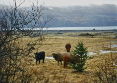 Kodiak, AK North To Alaska, World, Beach, Places, Pictures, Animals, The World, Photos, Animales