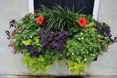 I wish I had these on the front of our house.  A future DIY