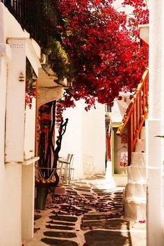 This is why I loved Mykonos, Greece; the quaint cobble streets, beautiful bouganvillea, and of course the Gyros!