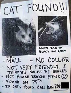 Had to have been found in NYC. New Yorkers would probably mistake a possum for a cat.