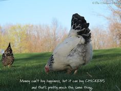 Money can't buy happiness, but it can buy chickens and that's pretty much the same thing. ♥