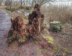 Decaying old treestump. Denmark. Taken with Sony Xperia Z1 smartphone
