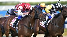 Watermans Bay (AUS) 2008 B.g. (Eternity Range (USA)-Parisian Princess (AUS) by Ron Bon (USA) 1st MRC Victoria H (AUS-G3,1400mT,Caulfield)