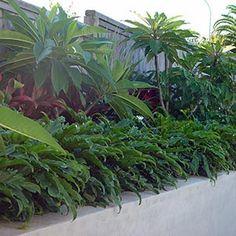 Dwarf Xanadu Small Backyard Pools, Tropical Backyard, Tropical Plants, Tropical Gardens, Bali Garden, Garden Landscape Design, Landscaping Plants, Plant Design, Trees To Plant