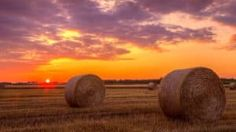 Making Your Farm Shine through Photography -LANDTHINK.com #realestate