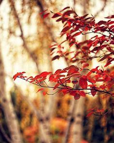 Nature Landscape Photography Burning Red  by AmeliaKayPhotography