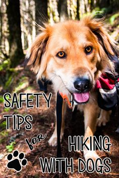 If you are a new dog owner, taking your pup on the trail is a learning process. To help you work through the ups and downs, here's some important tips for keeping your number 1 mutt safe and comfortable while turning them into the ultimate adventure dog. Hiking Dogs, Camping And Hiking, Rv Camping, Hiking With Dog, Backpacking With Dogs, Camping Ideas, Traveling With Dogs, Hiking Gear, Camping Equipment