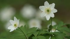 Luonto herää kevääseen. Lyhyitä opetusvideoita. Yle Oppiminen.