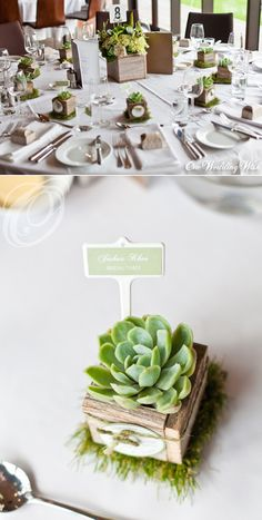 What's more adorable than a succulent bomboniere in a rustic wooden box? Claire, these could be place cards, bomboniere and table decorations all in one!!!                                                                                                                                                                                 More