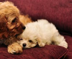 cuddle_puppies_by_Mjag.jpg (900×744)