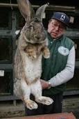 conejos bebes - Google Search