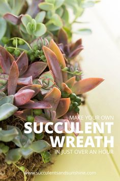 Making a succulent wreath doesn't have to take a long time! Learn how to make your own!