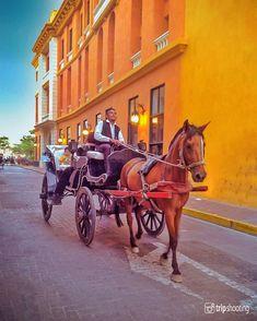 """Fotografía de viajes en Instagram: """"Si quieres saber el estado de salud de un caballo antes de subir a un carruaje como este, tócale el pelo. Debe sentirse suave. . . . 📷…"""" Horses, Animals, Instagram, Health Care, Travel Photography, Do I Wanna Know, Fotografia, Colombia, Animales"""