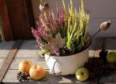 U nás na kopečku: Všechno září Onion, Autumn, Vegetables, Label, Search, Fall Season, Onions, Searching, Fall