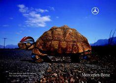 Mercedes turtle