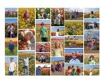 What to do with all those great family pictures? Photo Collage Ideas.  Collage.com