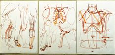 Мастер-класс по анатомии, первая часть: strg_circle