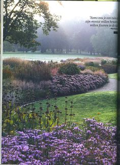 Tuin Piet Oudolf. I could look at this photo all day! How peaceful with the curves and green & mauve. Love it.