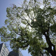 木漏れ日(komorebi; sunlight filtering through trees)