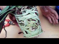 Trasplante Orquídea Phalaenopsis - YouTube Growing Orchids, Growing Plants, Pretty Flowers, Youtube, Aloe, Planting Flowers, Replant, Gardens, Gloves