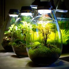 Here are outdoor lighting ideas for your yard to help you create the perfect nighttime entertaining space. outdoor lighting ideas, backyard lighting ideas, frontyard lighting ideas, diy lighting ideas, best for your garden and home Small Terrarium, Garden Terrarium, Bonsai Garden, Succulent Terrarium, Indoor Water Garden, Indoor Plants, Backyard Lighting, Outdoor Lighting, Lighting Ideas