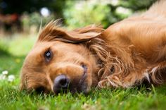 Dogs love synthetic turf!